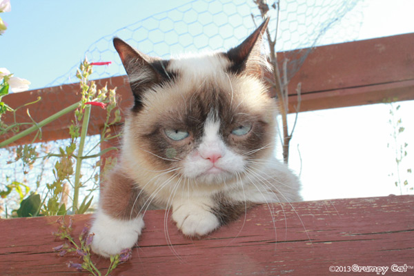 Grumpy-cat-small