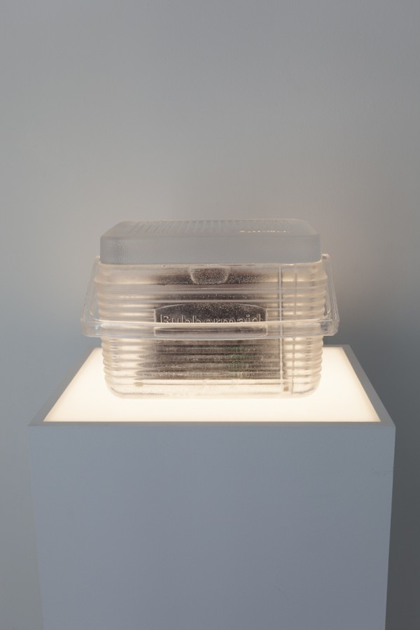 Think Strong, 2013, Blood doped with Welbutrin, cast-urethane, refrigeration elements, lightbox pedestal (fluorescent lights, wood, plexi)