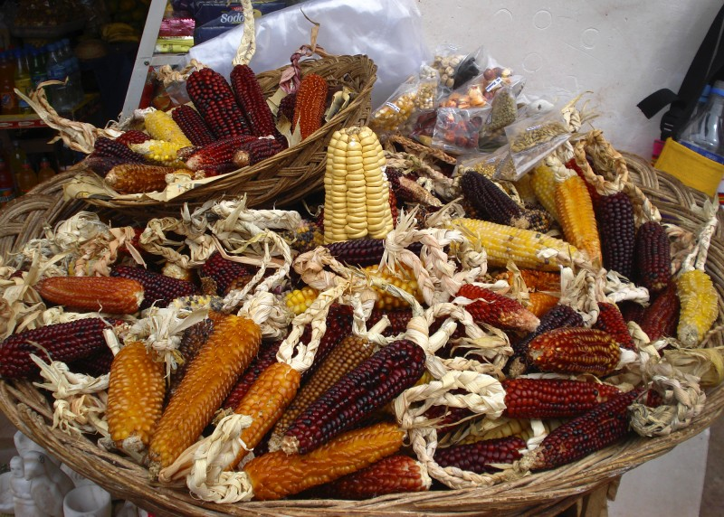 Local corn varieties of Maras province, Cuzco, Perú. Photo: Manuel Munive