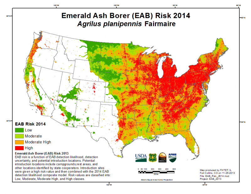 The emerald ash borer has spread to over 20 states since its accidental introduction to the United States from Asia. At current rates, EAB could functionally extirpate ash trees, with important ecological and economic ramifications. Produced by FHTET, © USDA