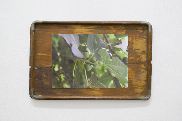 2x2, 2014, Digital C-print, wooden tray, 45.5 × 29 × 2.5 cm