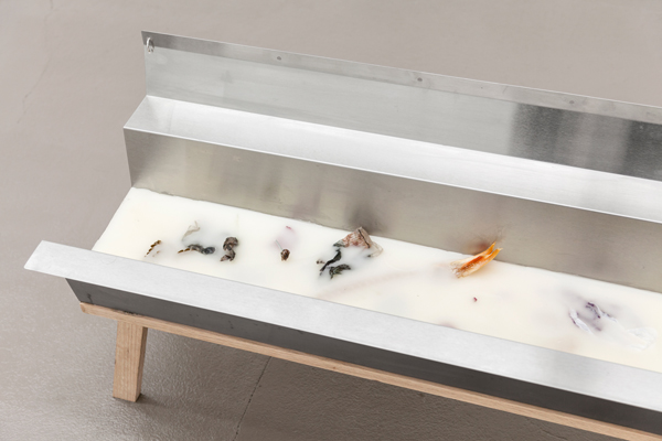 Miami-Dutch, Trough (detail), 2015, Stainless steel, beeswax, paraffn wax, oak, fowers, fsh bone, paper, earrings, shoelace, 18.75 x 48 x 15 inches (47.63 x 121.92 x 38.10 cm), Unique