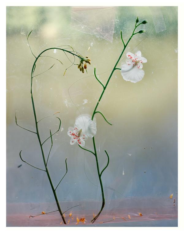 Ketuta Alexi-Meskhishvili Blumen, 2013 Archival pigment print  39x31cm