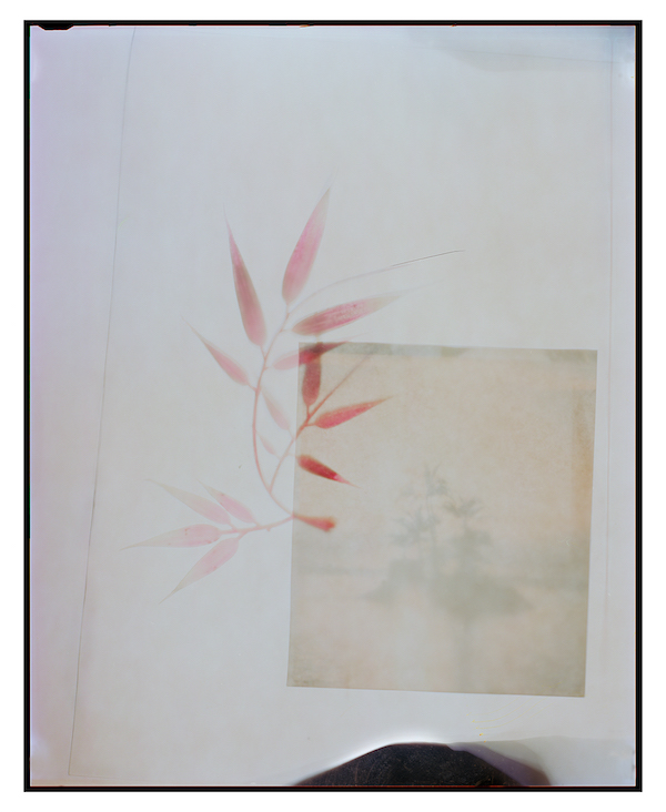 Ketuta Alexi-Meskhishvili Isa flower, 2013 Archival pigment print 61 x 50 cm