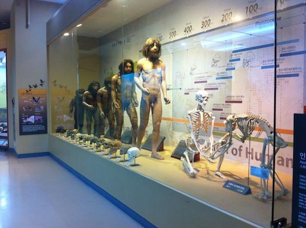 Vitrine at the Seodaemun Museul of Natural History, Seoul
