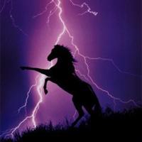 Thunderhorse Video